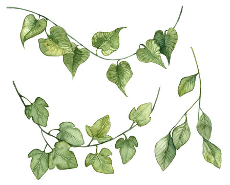Collection of watercolor hand painted ivy leaves