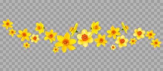 Obraz Daffodils decor on transparent background - fototapety do salonu