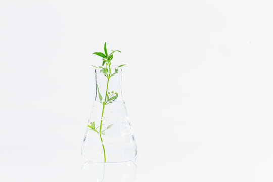 Test tubes with plants growing in nutrient medium standing in laboratory tube adaptor over white background with copy space for the text