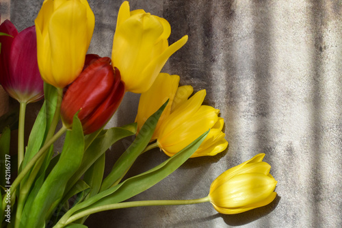Lovely bouquet of fresh tulips in rays of sunlight on background of concrete wall. Bouquet of yellow spring flowers on gray background. Greeting card: mother's day, 8 March, birthday. Space for text.