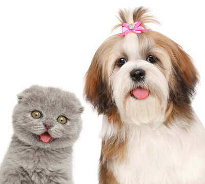 Kitten and dog looking at the camera