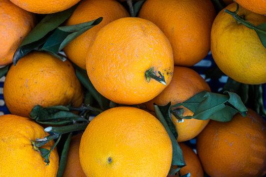 oranges on the market