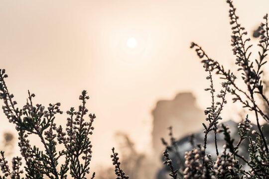 Foggy Sunrise In Palatine Forest