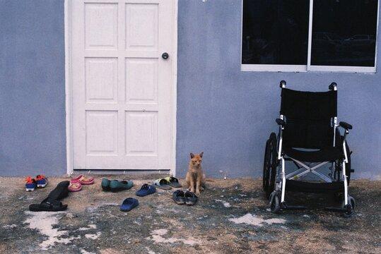Cat Sitting On Door Of House