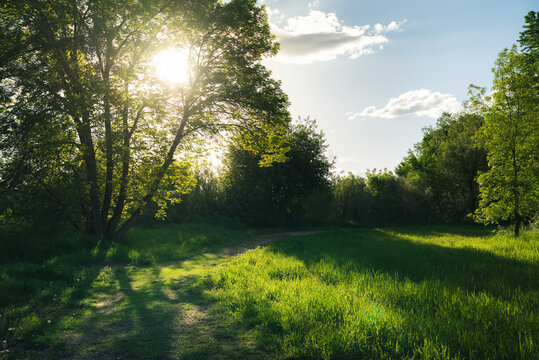 Sunset on a grassy path in the forest.
