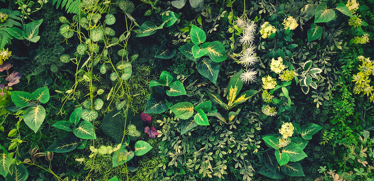 High Angle View Of Flowers Growing On Field