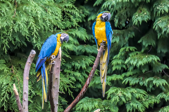 Close-up Of Blue Parrot Perching On Tree