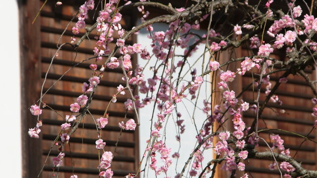 Low Angle View Of Pink Flowering Plant Hanging