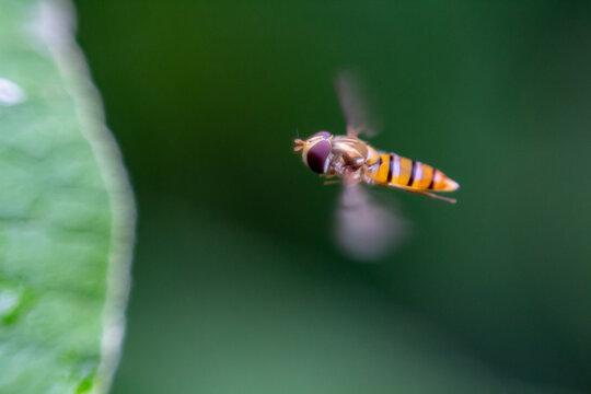 Macro Photography Series - June 2020 - In Flight