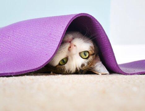 Close-up Portrait Of Cat Lying Under Purple Yoga Mat