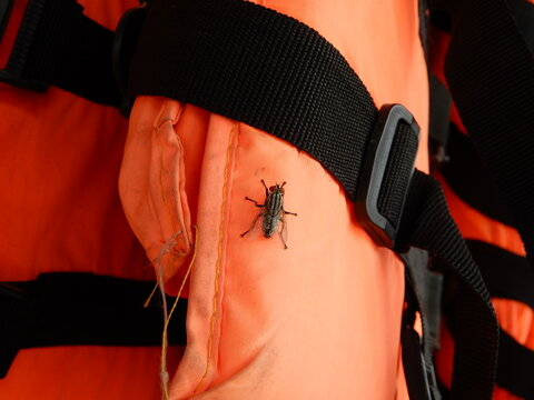 Close-up Of Fly On Life Jacket  In Cambodia.