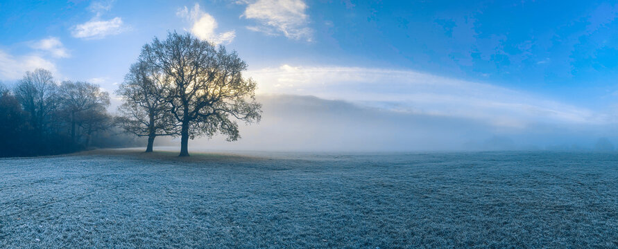 Tree On Frost Covered Field Against Sky And Fog
