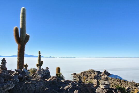 Cactus On Rock By Sea Against Clear Blue Sky