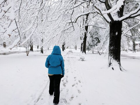 Rear View Of Wowan Walking On Snow Covered Path Lined By Trees In Louisville, Kentucky