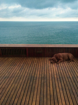 View Of Dog Resting On Wood By Sea Against Sky