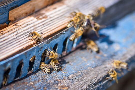 High Angle View Of Honey Bees Flying Around Old Wooden Bee House