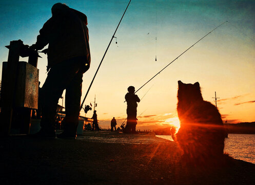 Silhouette Men Fishing And Stray Cat At Sunset