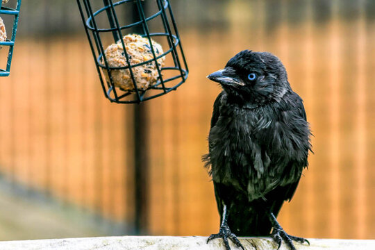 Close-up Of Bird Perching Outdoors