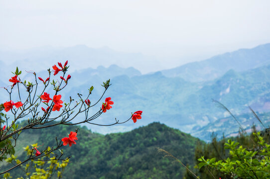Red Flowering Plant Against Mountain Range