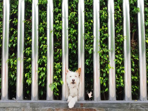Portrait Of Dog By Plants