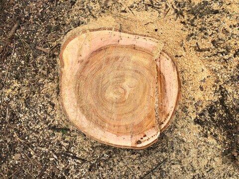 切ったばかりの木の切り株
