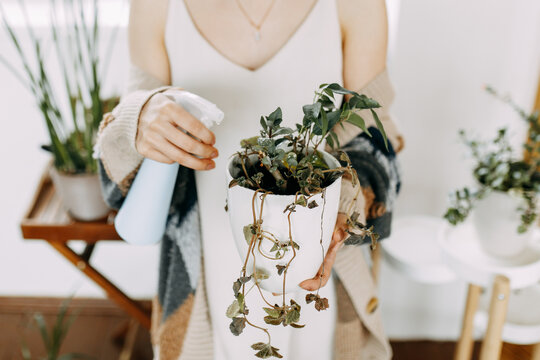 Girl Florist Gardener Watering And Spraying Potted Plants And Flowers At Home, Take Care Of Plants
