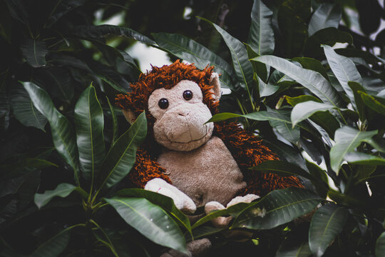 A Stuffed Monkey Sitting On A Leaf Branch Of A Mango Tree