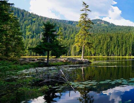 Halbinsel im großen Arbersee, Bayerischer Wald