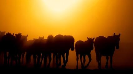 Silhouette Horses On Field Against Orange Sky