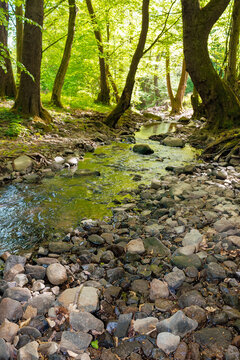 wild water stream in the forest. beautiful nature scenery on a sunny spring day. trees in vivid green foliage. stones on the shore. freshness of nature concept