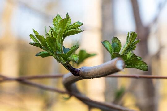 Photographie macro d'une branche d'arbre qui pousse