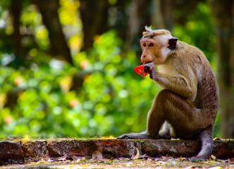 Monkey Eating Food On Land