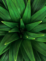 Fototapeta Full Frame Shot Of Green Plant obraz