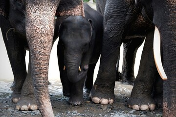 View Of Elephants At National Park In Tangkahan