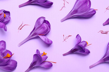 Beautiful Saffron crocus flowers on light violet background, flat lay