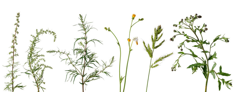 Many wild meadow plants with flowers and leaves on white background