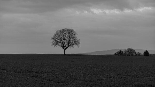 Baum am Abend mit Beiwerk