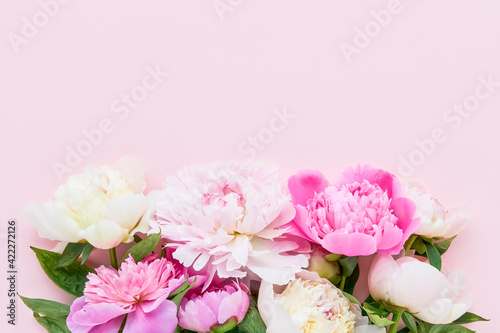 Pink and white peonies on pink background. Birthday, Valentines Day, Mother's day concept.