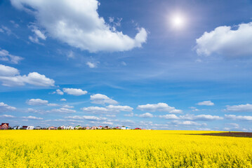 Wall Mural - Yellow canola field in sunlight. Location rural place of Ukraine, Europe.
