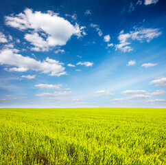 Wall Mural - Fantastic green field with white fluffy clouds. Location place Ukraine, Europe.