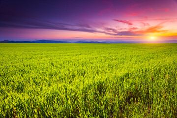 Wall Mural - Fantastic green field with colorful clouds. Location place Ukraine, Europe.