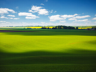 Wall Mural - Vivid green field on the springtime and fluffy white clouds on a sunny day.