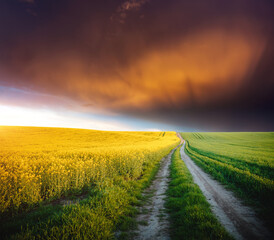 Wall Mural - Dramatic summer meadow with yellow rapeseed at sundown.