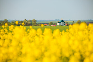 Wall Mural - Gorgeous summer meadow with yellow rapeseed on a sunny day.
