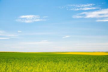 Wall Mural - Bright green field and perfect blue sky.