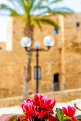 Tel Aviv, Israel - March 15, 2021: pink flowers and blured one of the narrow streets of old Jaffa
