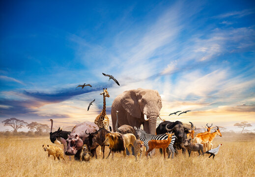 Animals in Africa giraffe, lion, elephant, others