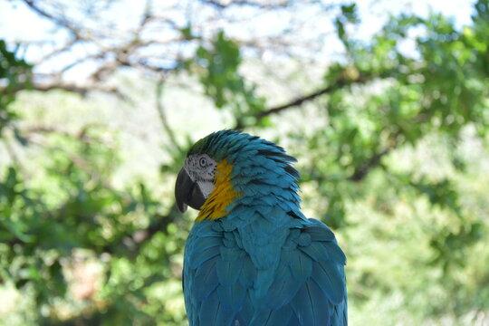 Lora, guacamayo, ave, pajaro, paisaje, arboles y naturaleza