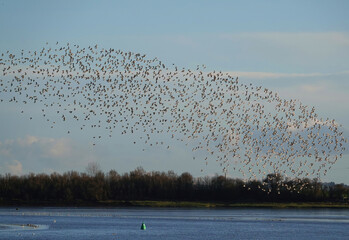 Mesmerizing view of a flock of birds flying in the sky above the river