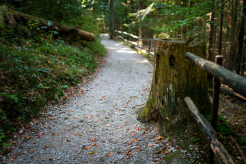 Obraz The trail through the beautiful canyon of the Slowacki Raj National Park - fototapety do salonu